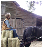 Charleston Coach provides horse drawn hay wagons perfect for any time of year.